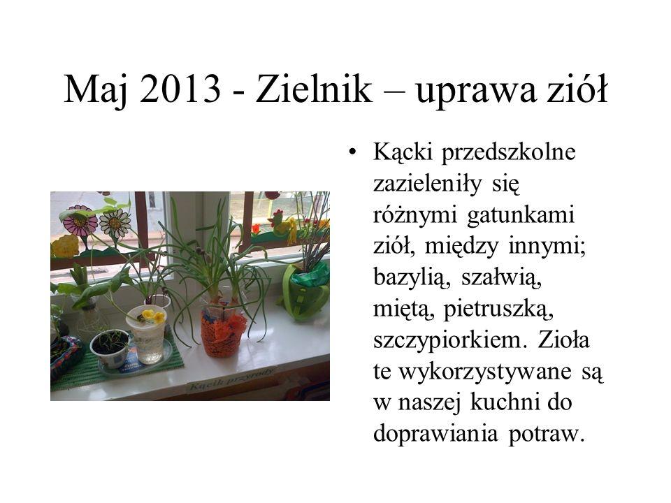 Maj 2013 - Zielnik – uprawa ziół Kącki przedszkolne zazieleniły się różnymi gatunkami ziół, między innymi; bazylią, szałwią, miętą, pietruszką, szczyp