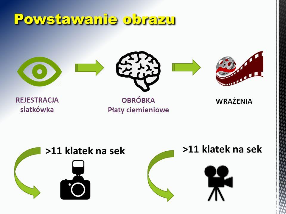 REJESTRACJA siatkówka OBRÓBKA Płaty ciemieniowe WRAŻENIA Powstawanie obrazu >11 klatek na sek