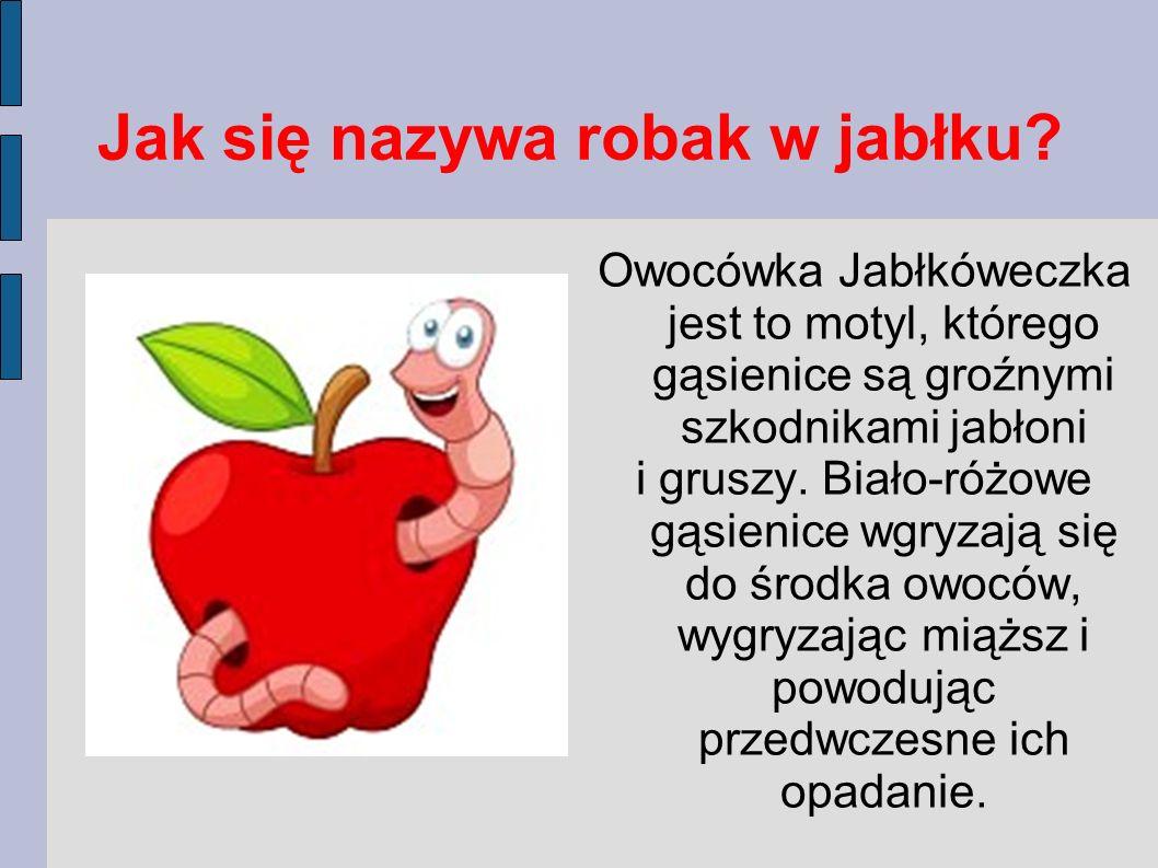 Dojrza łe jabłko spada na ziemię. W każdym jabłku są pestki, z których wyrasta drzewko - młoda jabłoń.