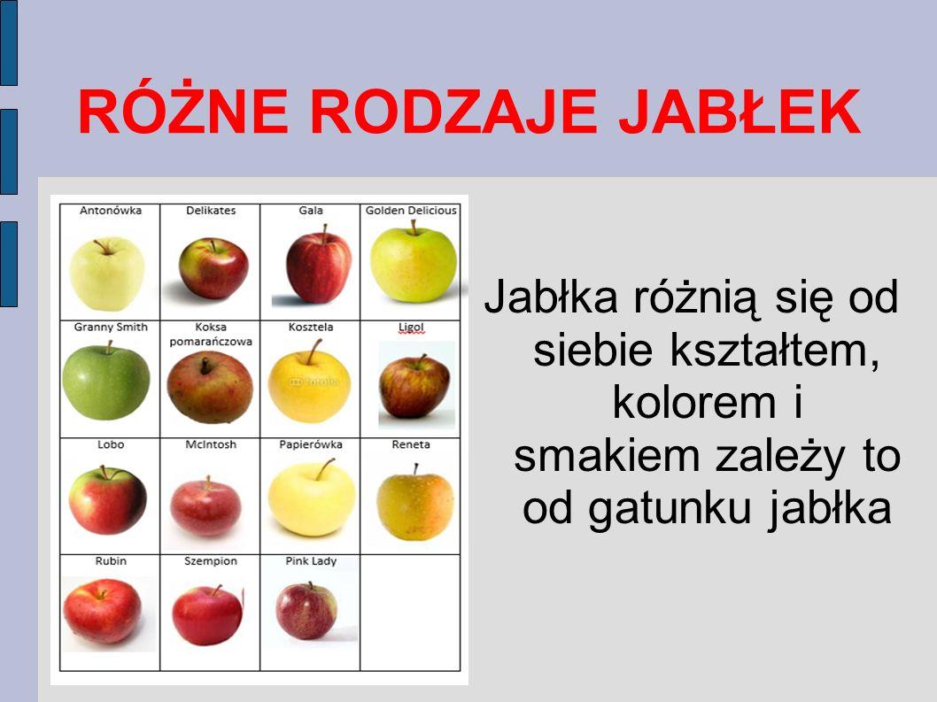 Jak się nazywa robak w jabłku? Owocówka Jabłkóweczka jest to motyl, którego gąsienice są groźnymi szkodnikami jabłoni i gruszy. Biało-różowe gąsienice
