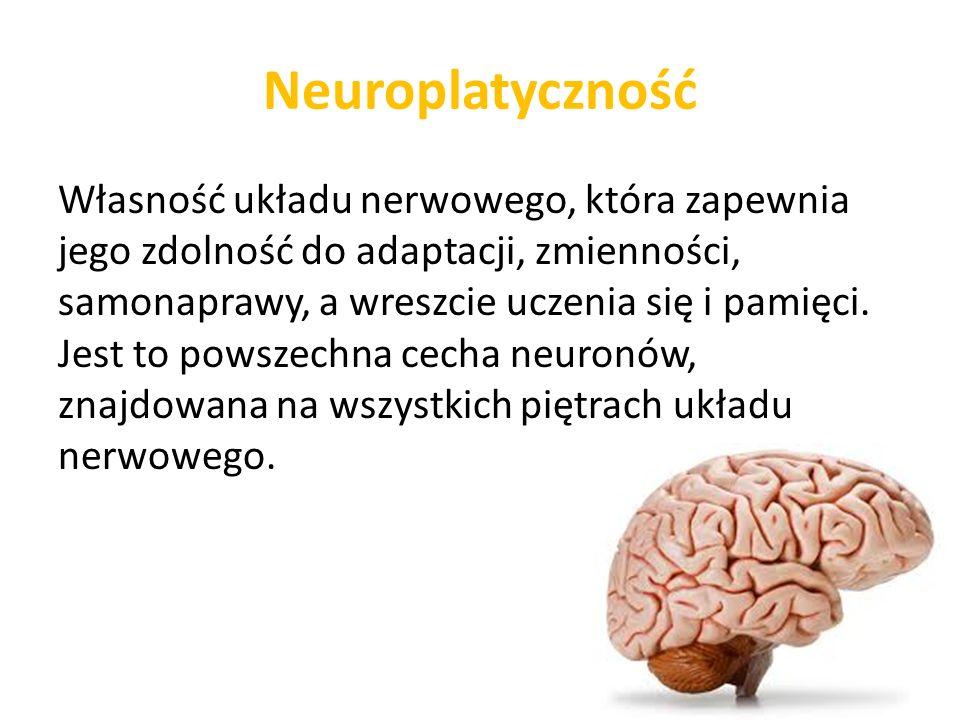 Neuroplastyczność Badania sugerują, że: trening musi stanowić wyzwanie ćwiczenia powinny być powtarzalne oparte o specyficzne zadania powinny motywować pacjenta zadania powinny być zrozumiałe intensywność właściwie dobrana, aby w jak najwyższym stopniu stymulować zdolność tkanki nerwowej do samonaprawy