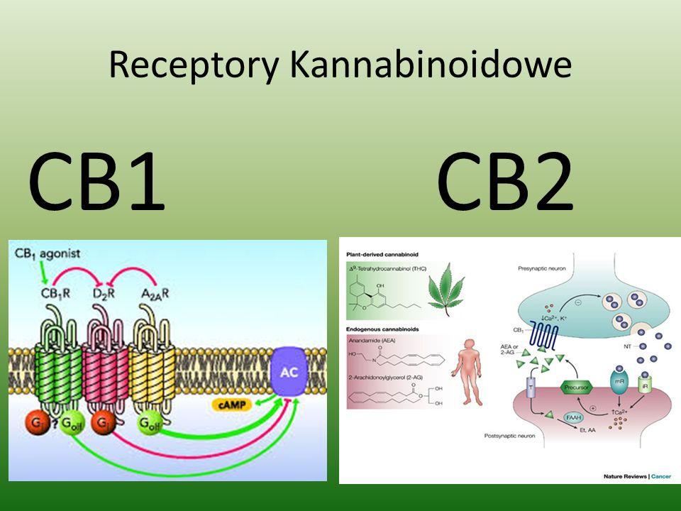 Receptory Kannabinoidowe CB1 CB2