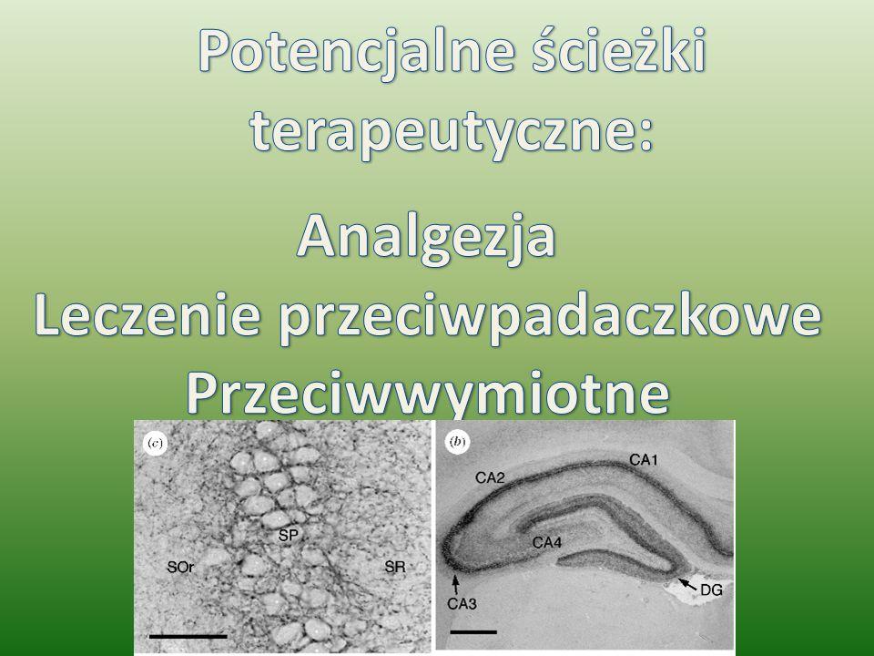 Analgezja Receptory kannabinoidowe obecne w 1,2,10- blaszkach Rexeda rdzenia kręgowego.