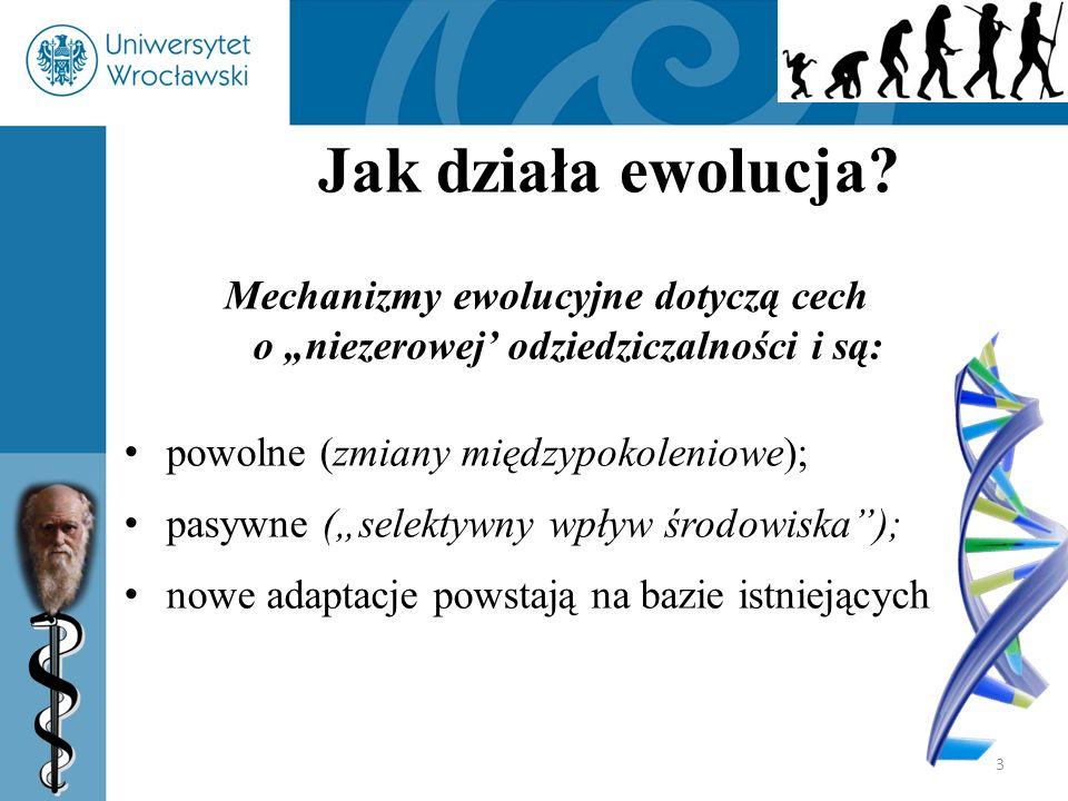 """3 Jak działa ewolucja? Mechanizmy ewolucyjne dotyczą cech o """"niezerowej' odziedziczalności i są: powolne (zmiany międzypokoleniowe); pasywne (""""selekty"""