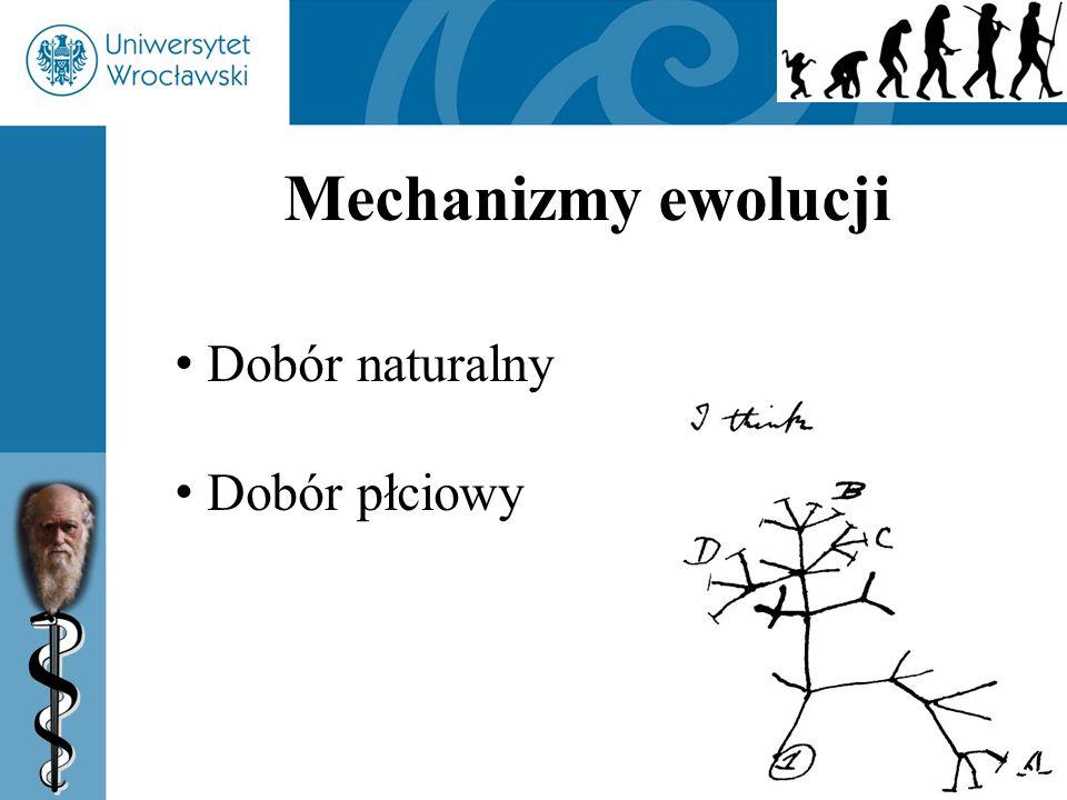 54 Mechanizmy ewolucji Dobór naturalny Dobór płciowy