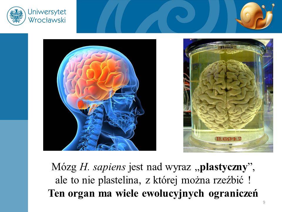 """9 Mózg H. sapiens jest nad wyraz """"plastyczny"""", ale to nie plastelina, z której można rzeźbić ! Ten organ ma wiele ewolucyjnych ograniczeń"""