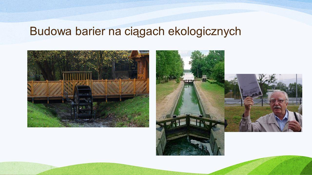 Budowa barier na ciągach ekologicznych