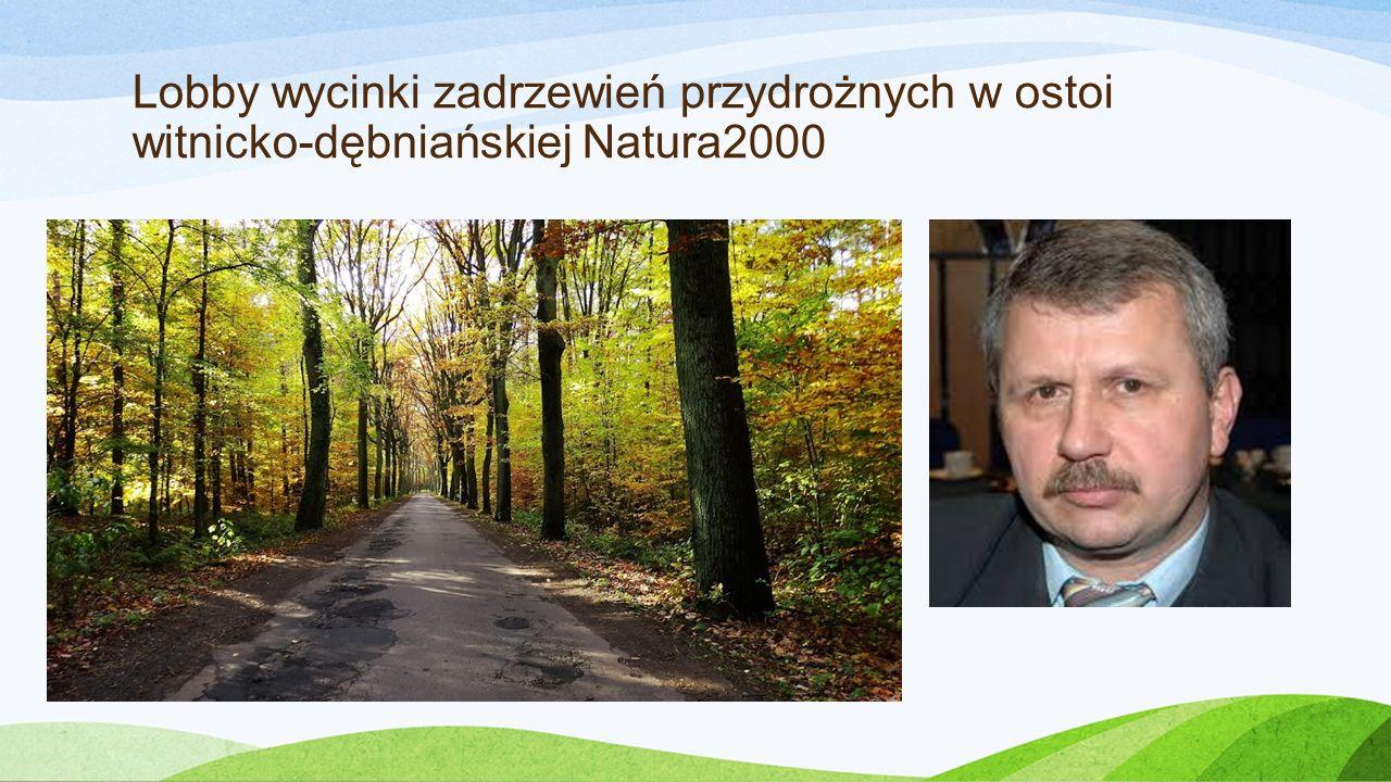 Lobby wycinki zadrzewień przydrożnych w ostoi witnicko-dębniańskiej Natura2000