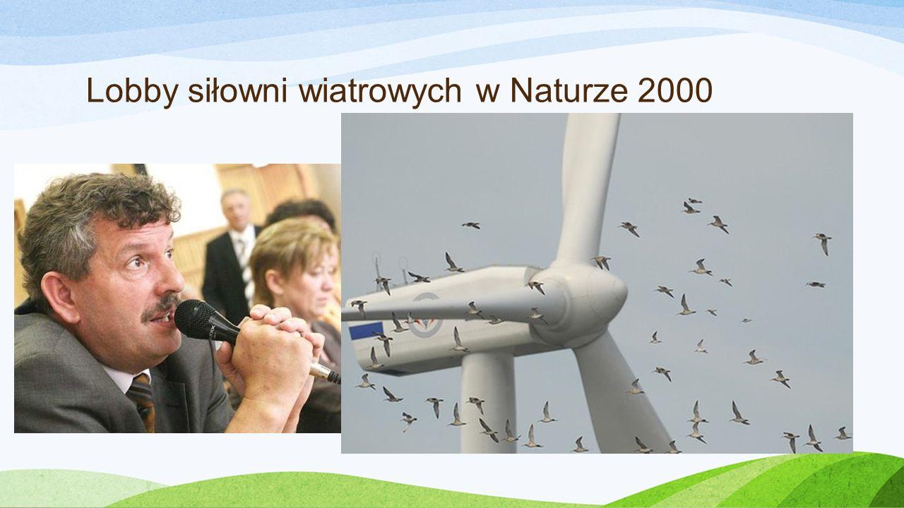 Lobby siłowni wiatrowych w Naturze 2000