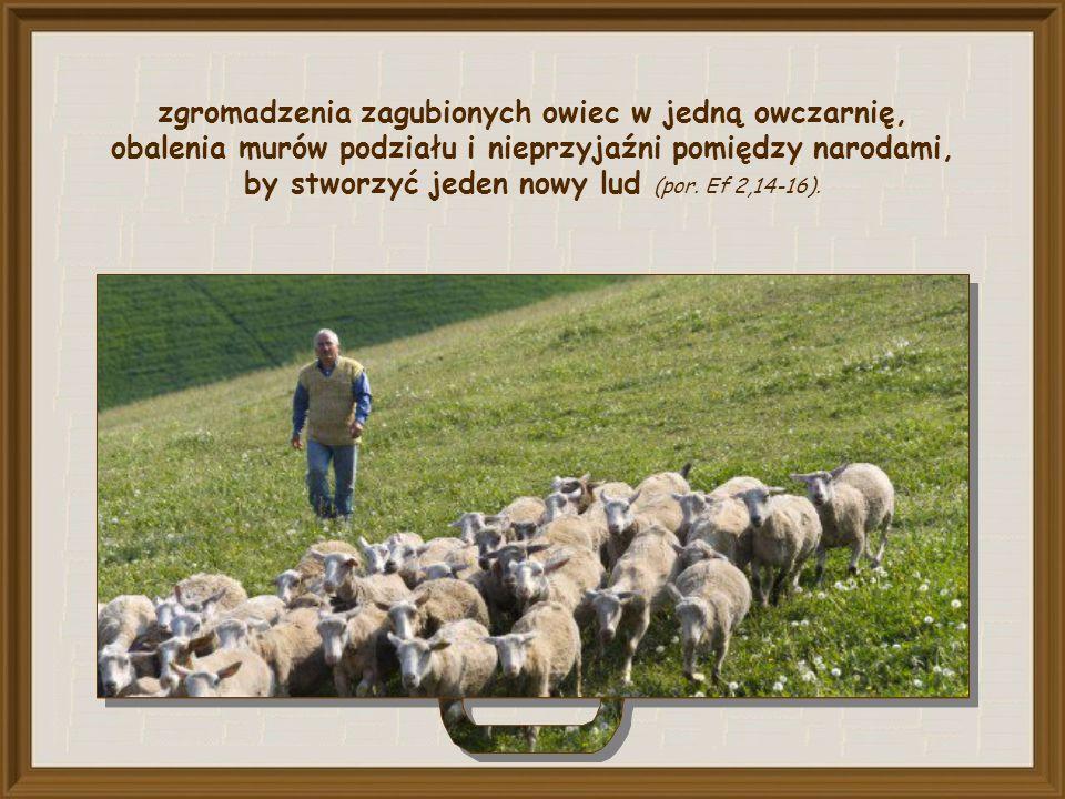 zgromadzenia zagubionych owiec w jedną owczarnię, obalenia murów podziału i nieprzyjaźni pomiędzy narodami, by stworzyć jeden nowy lud (por.