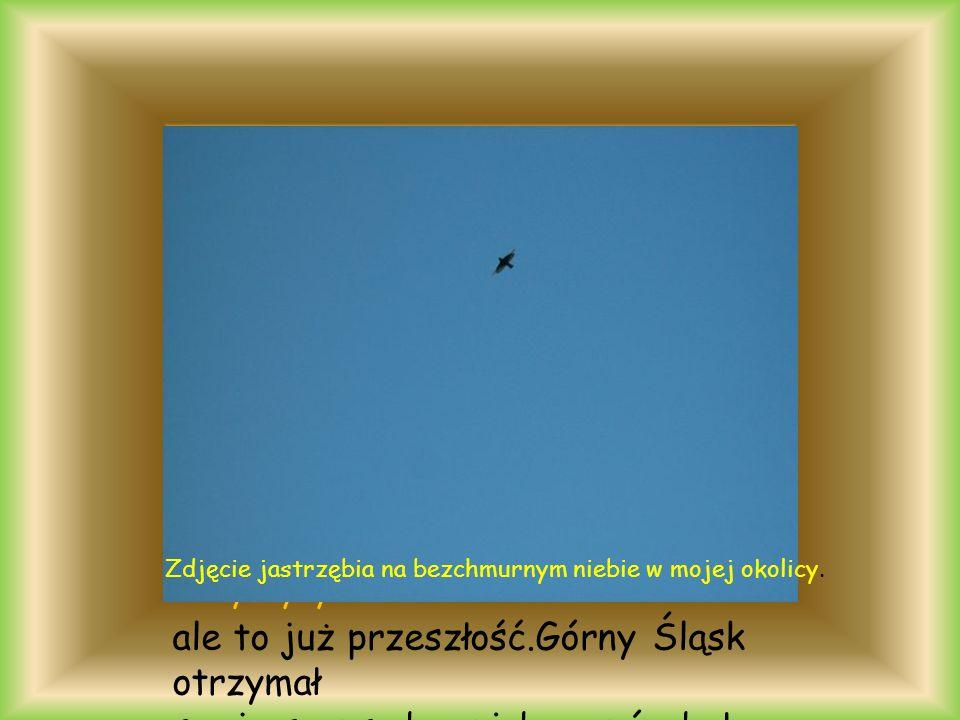 ale to już przeszłość.Górny Śląsk otrzymał swoją szansę,by niebo znów było błękitne okolice Byczyny Zdjęcie jastrzębia na bezchmurnym niebie w mojej okolicy.