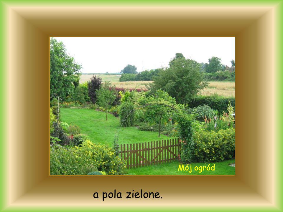 a pola zielone. Mój ogród