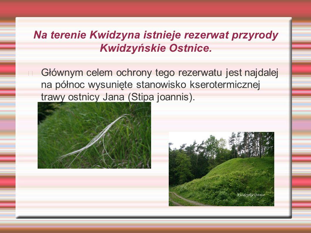 Na terenie Kwidzyna istnieje rezerwat przyrody Kwidzyńskie Ostnice. Głównym celem ochrony tego rezerwatu jest najdalej na północ wysunięte stanowisko