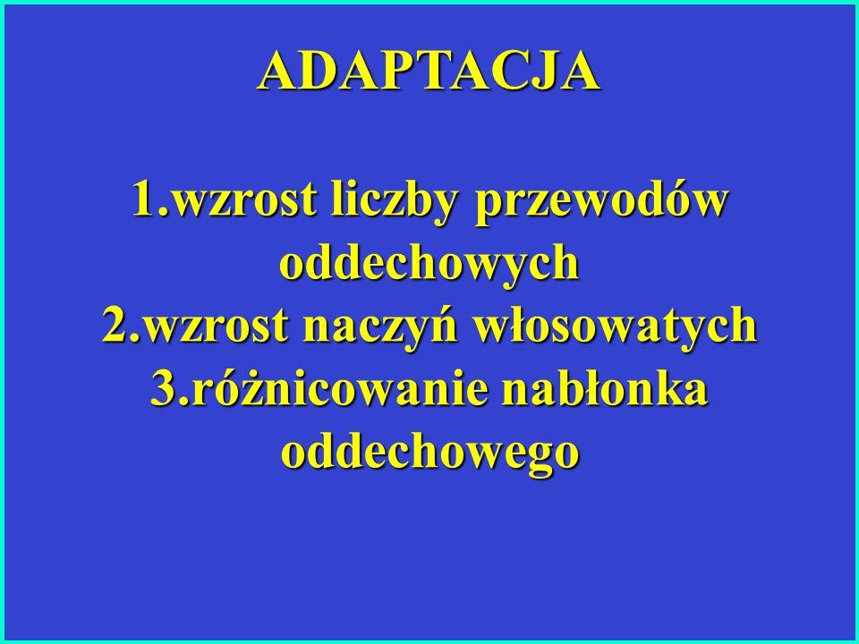 1.wzrost liczby przewodów oddechowych 2.wzrost naczyń włosowatych 3.różnicowanie nabłonka oddechowego ADAPTACJA ADAPTACJA