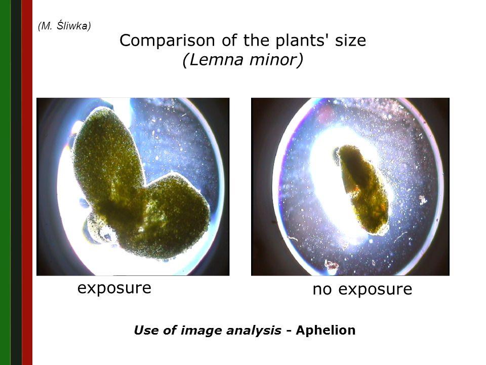 The application of laser biostimulation of Sida hermaphrodita Anna Ślązak Experimental group Control group