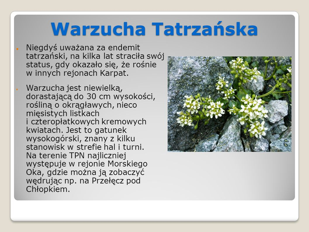 Warzucha Tatrzańska Niegdyś uważana za endemit tatrzański, na kilka lat straciła swój status, gdy okazało się, że rośnie w innych rejonach Karpat.