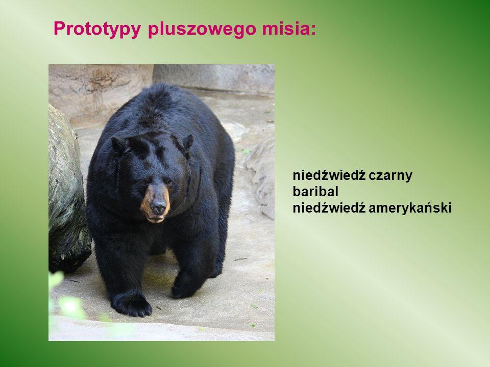 Prototypy pluszowego misia: niedźwiedź czarny baribal niedźwiedź amerykański