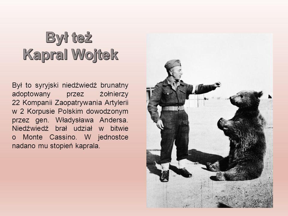 Był to syryjski niedźwiedź brunatny adoptowany przez żołnierzy 22 Kompanii Zaopatrywania Artylerii w 2 Korpusie Polskim dowodzonym przez gen.
