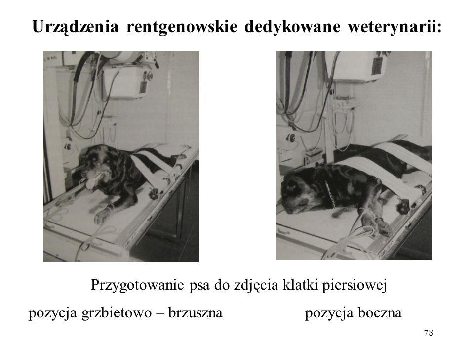 78 Urządzenia rentgenowskie dedykowane weterynarii: Przygotowanie psa do zdjęcia klatki piersiowej pozycja grzbietowo – brzuszna pozycja boczna