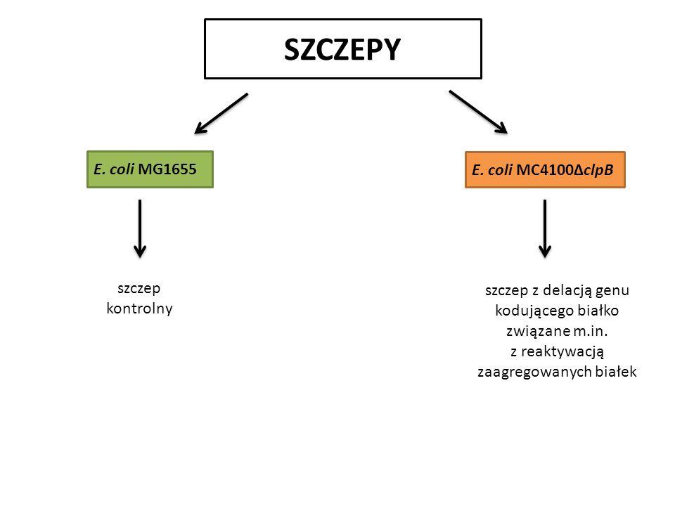 SZCZEPY E. coli MG1655 E.