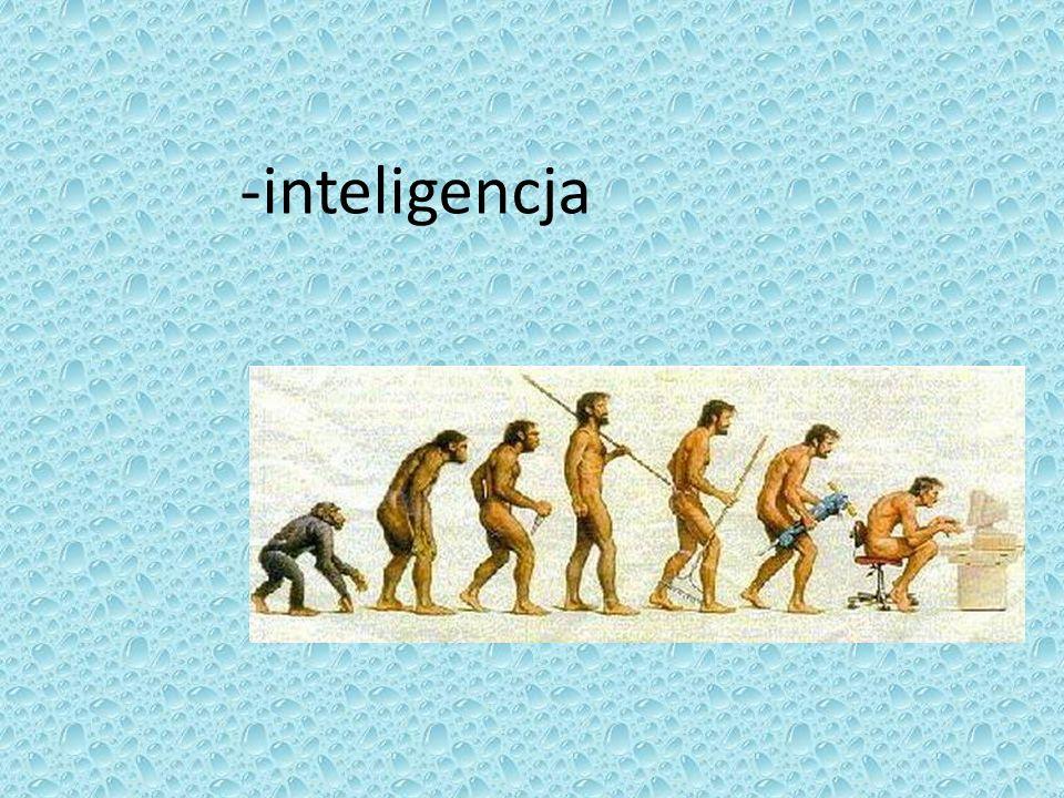 -inteligencja
