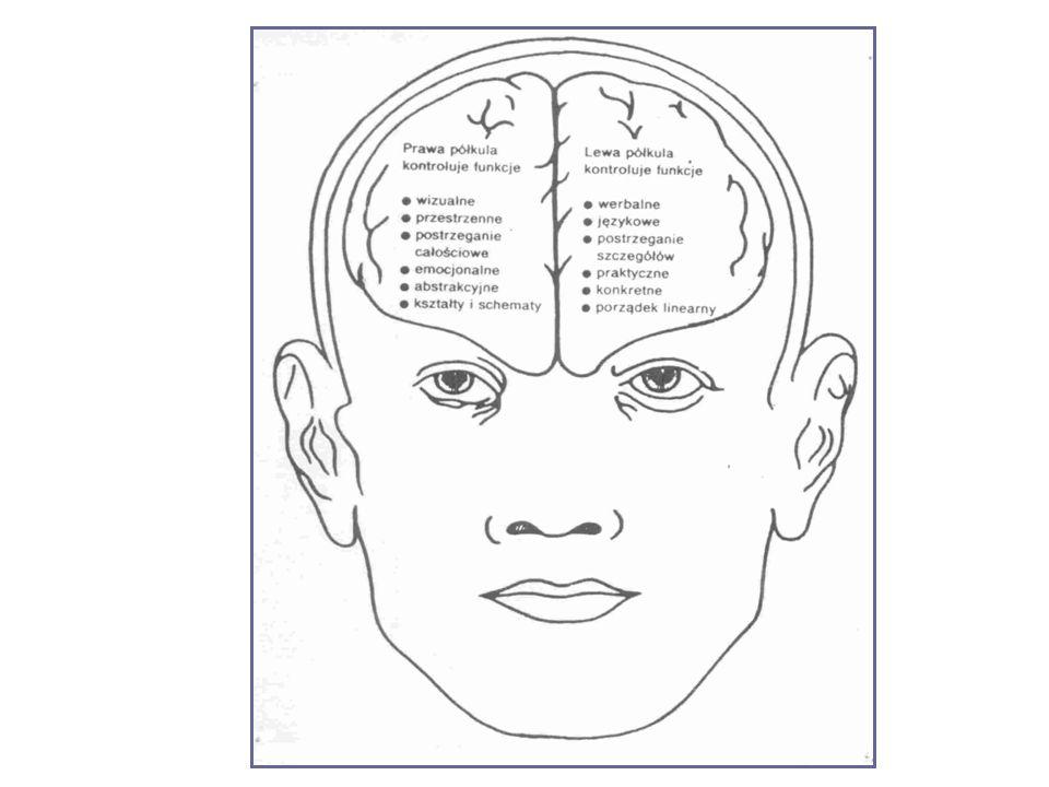 Jak pracuje mózg? Jak funkcjonuje mózg?