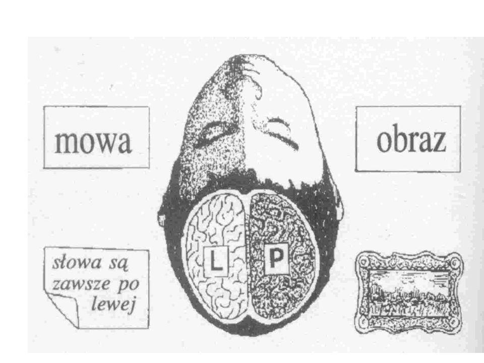Funkcje półkul mózgowych Półkula lewa Logika Porządkowanie Cyfry Analiza Język Sekwencje Metody, reguły Półkula prawa Wyobraźnia Emocje Skojarzenia Sy