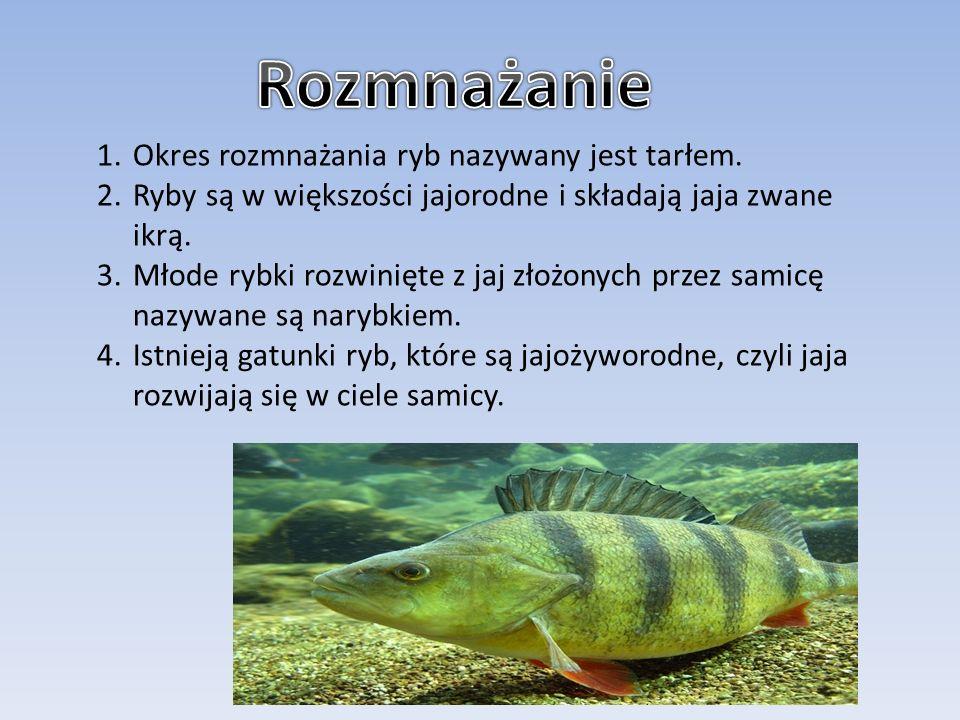 1.Okres rozmnażania ryb nazywany jest tarłem. 2.Ryby są w większości jajorodne i składają jaja zwane ikrą. 3.Młode rybki rozwinięte z jaj złożonych pr