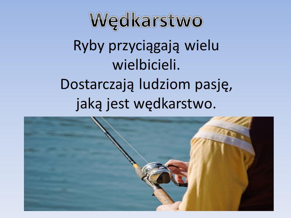 Ryby przyciągają wielu wielbicieli. Dostarczają ludziom pasję, jaką jest wędkarstwo.