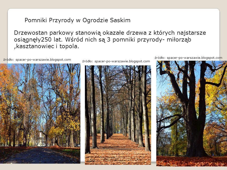 Pomniki Przyrody w Ogrodzie Saskim Drzewostan parkowy stanowią okazałe drzewa z których najstarsze osiągnęły250 lat. Wśród nich są 3 pomniki przyrody-