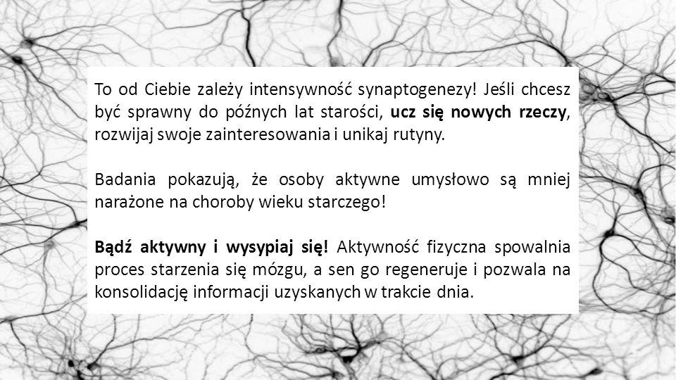 To od Ciebie zależy intensywność synaptogenezy! Jeśli chcesz być sprawny do późnych lat starości, ucz się nowych rzeczy, rozwijaj swoje zainteresowani