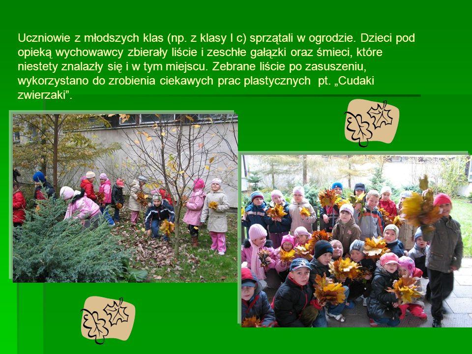 Uczniowie z młodszych klas (np. z klasy I c) sprzątali w ogrodzie.