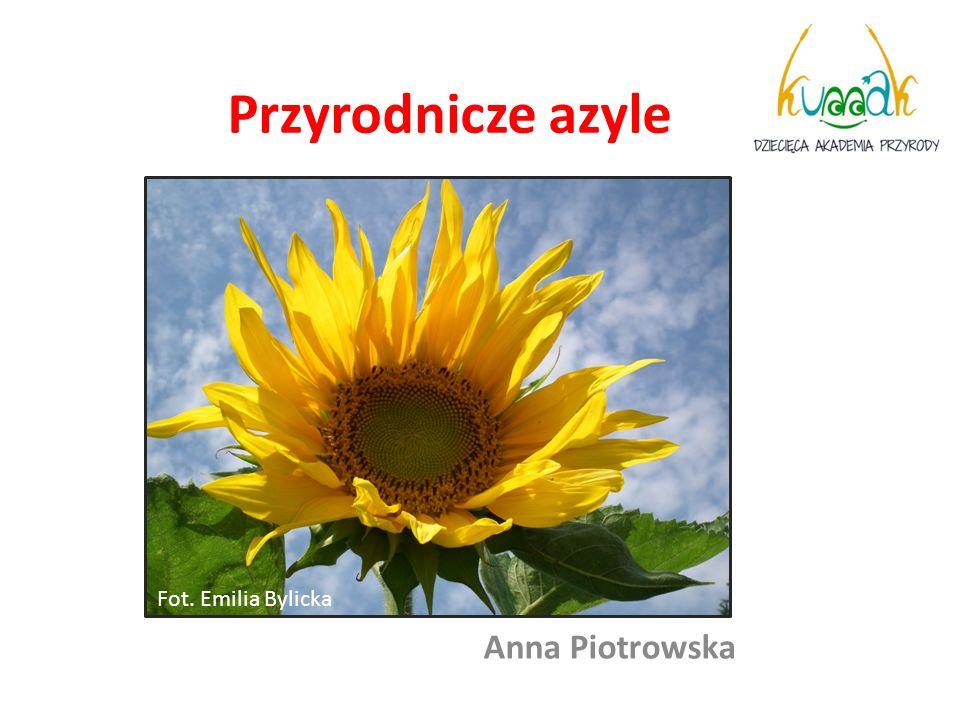 Przyrodnicze azyle Anna Piotrowska Fot. Emilia Bylicka