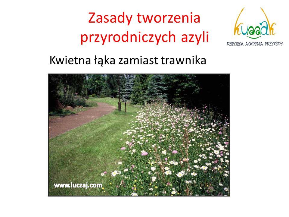 Harmonogram prac 1) Grudzień - cele, założenia tworzenia ogrodu.