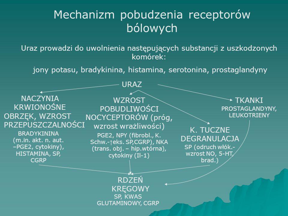 Mechanizm pobudzenia receptorów bólowych Uraz prowadzi do uwolnienia następujących substancji z uszkodzonych komórek: jony potasu, bradykinina, histamina, serotonina, prostaglandyny URAZ NACZYNIA KRWIONOŚNE TKANKI OBRZĘK, WZROST PRZEPUSZCZALNOŚCI BRADYKININA (m.in.