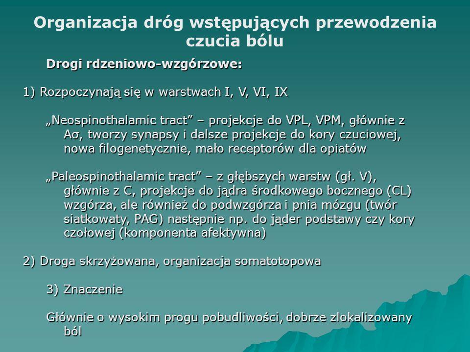"""Organizacja dróg wstępujących przewodzenia czucia bólu Drogi rdzeniowo-wzgórzowe: 1) Rozpoczynają się w warstwach I, V, VI, IX """"Neospinothalamic tract – projekcje do VPL, VPM, głównie z Aσ, tworzy synapsy i dalsze projekcje do kory czuciowej, nowa filogenetycznie, mało receptorów dla opiatów """"Paleospinothalamic tract – z głębszych warstw (gł."""