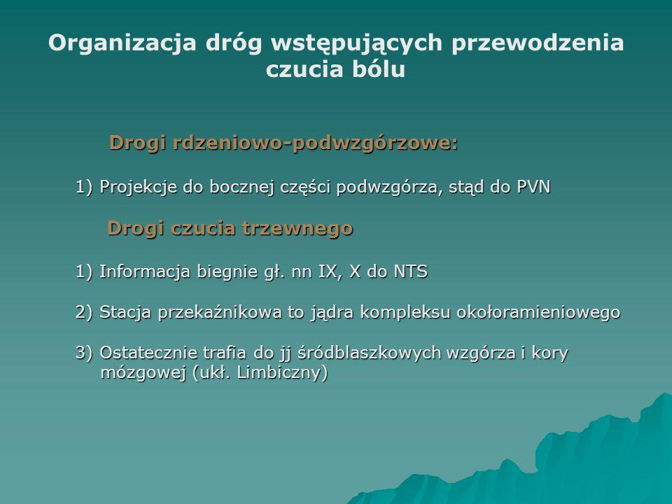 Organizacja dróg wstępujących przewodzenia czucia bólu Drogi rdzeniowo-podwzgórzowe: 1) Projekcje do bocznej części podwzgórza, stąd do PVN Drogi czuc
