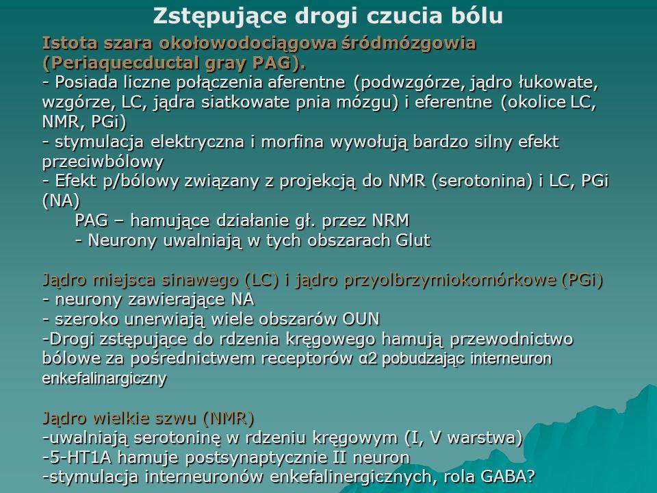 Istota szara okołowodociągowa śródmózgowia (Periaquecductal gray PAG). - Posiada liczne połączenia aferentne (podwzgórze, jądro łukowate, wzgórze, LC,