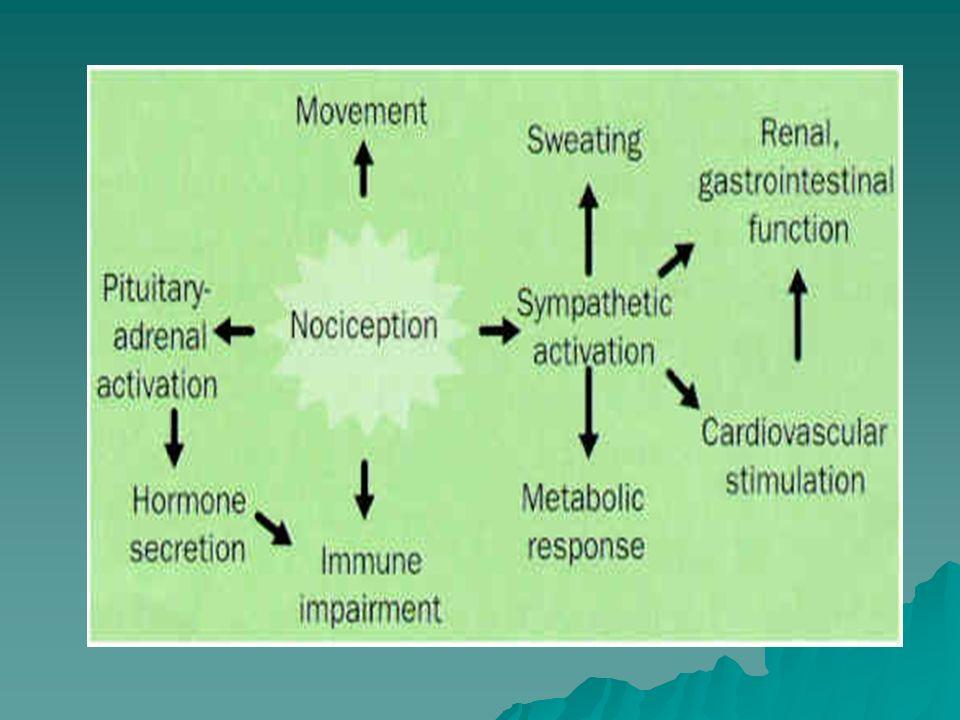 Endogenne peptydy opioidowe Endorfiny 1)Powstają z proopiomelanokortyny (POMC) w podwzgórzu i w przysadce (płat pośredni) 2)Neurony zawierające endorfiny zlokalizowane są w PAG, w pniu mózgu (jądra NA) 3) Wysokie powinowactwo do rec.
