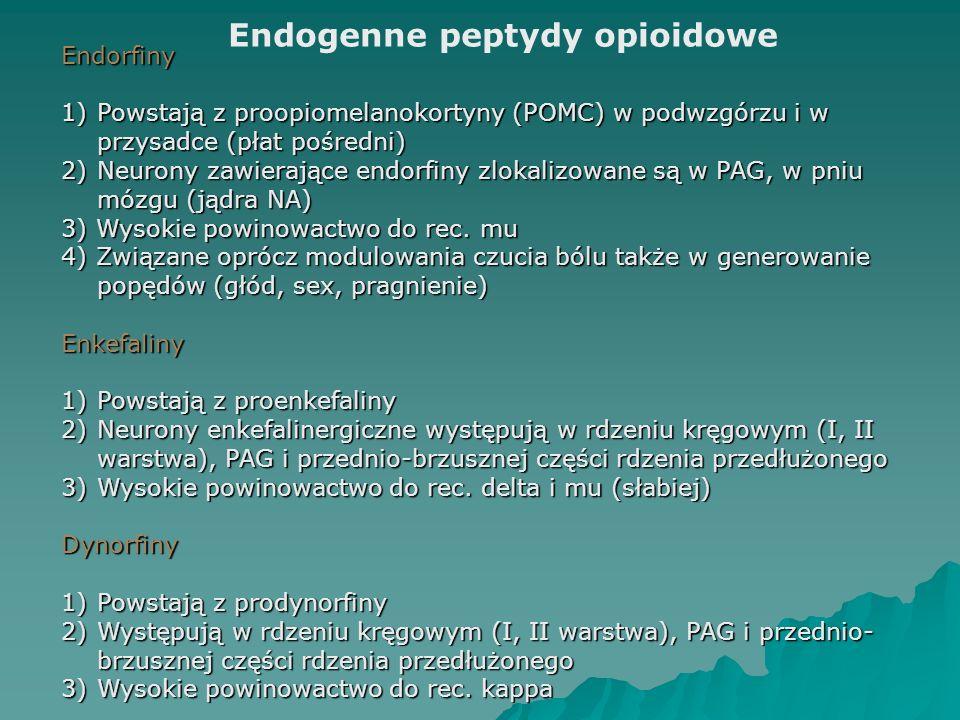 Endogenne peptydy opioidowe Endorfiny 1)Powstają z proopiomelanokortyny (POMC) w podwzgórzu i w przysadce (płat pośredni) 2)Neurony zawierające endorf