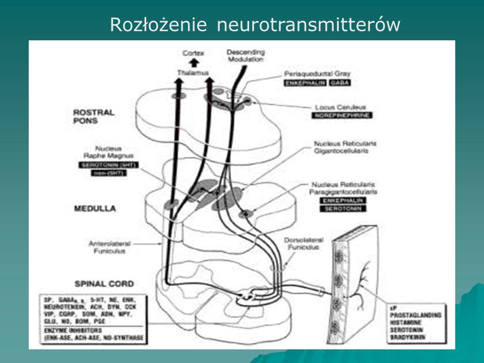Rozłożenie neurotransmitterów