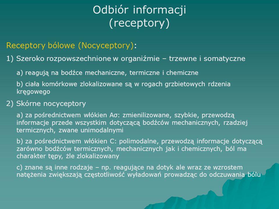 Odbiór informacji (receptory) Receptory bólowe (Nocyceptory): 1) Szeroko rozpowszechnione w organiźmie – trzewne i somatyczne a) reagują na bodźce mechaniczne, termiczne i chemiczne b) ciała komórkowe zlokalizowane są w rogach grzbietowych rdzenia kręgowego 2) Skórne nocyceptory a) za pośrednictwem włókien Aσ: zmienilizowane, szybkie, przewodzą informacje przede wszystkim dotyczącą bodźców mechanicznych, rzadziej termicznych, zwane unimodalnymi b) za pośrednictwem włókien C: polimodalne, przewodzą informacje dotyczącą zarówno bodźców termicznych, mechanicznych jak i chemicznych, ból ma charakter tępy, żle zlokalizowany c) znane są inne rodzaje – np.