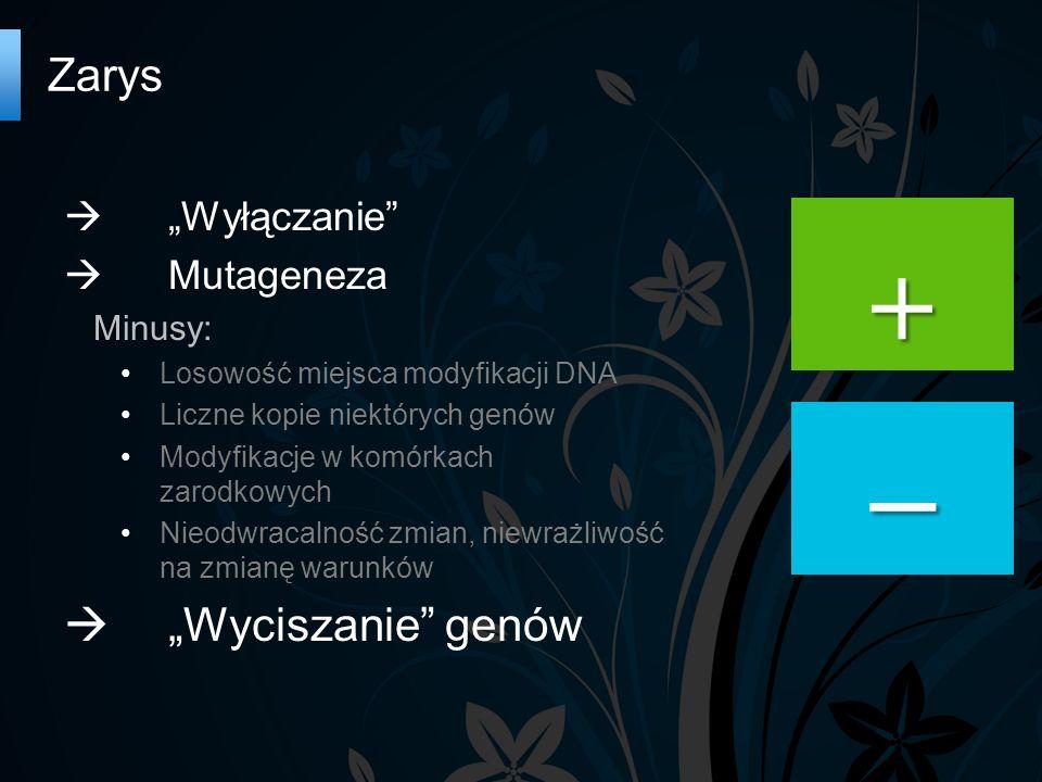 """Zarys   """"Wyłączanie  Mutageneza Minusy: Losowość miejsca modyfikacji DNA Liczne kopie niektórych genów Modyfikacje w komórkach zarodkowych Nieodwracalność zmian, niewrażliwość na zmianę warunków  """"Wyciszanie genów """