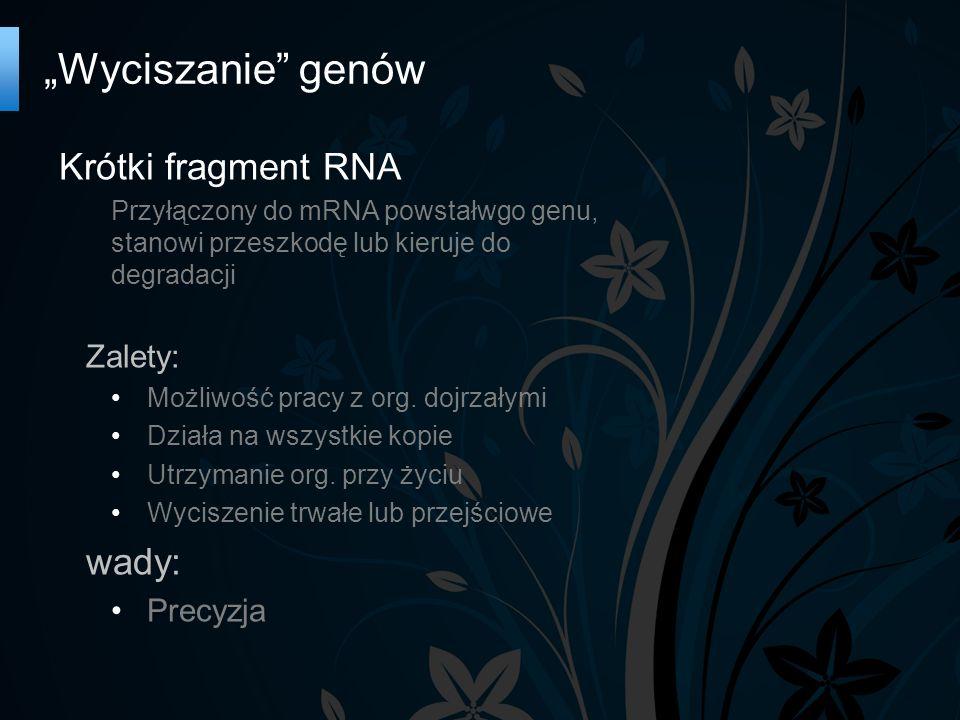 """""""Wyciszanie genów Krótki fragment RNA Przyłączony do mRNA powstałwgo genu, stanowi przeszkodę lub kieruje do degradacji Zalety: Możliwość pracy z org."""