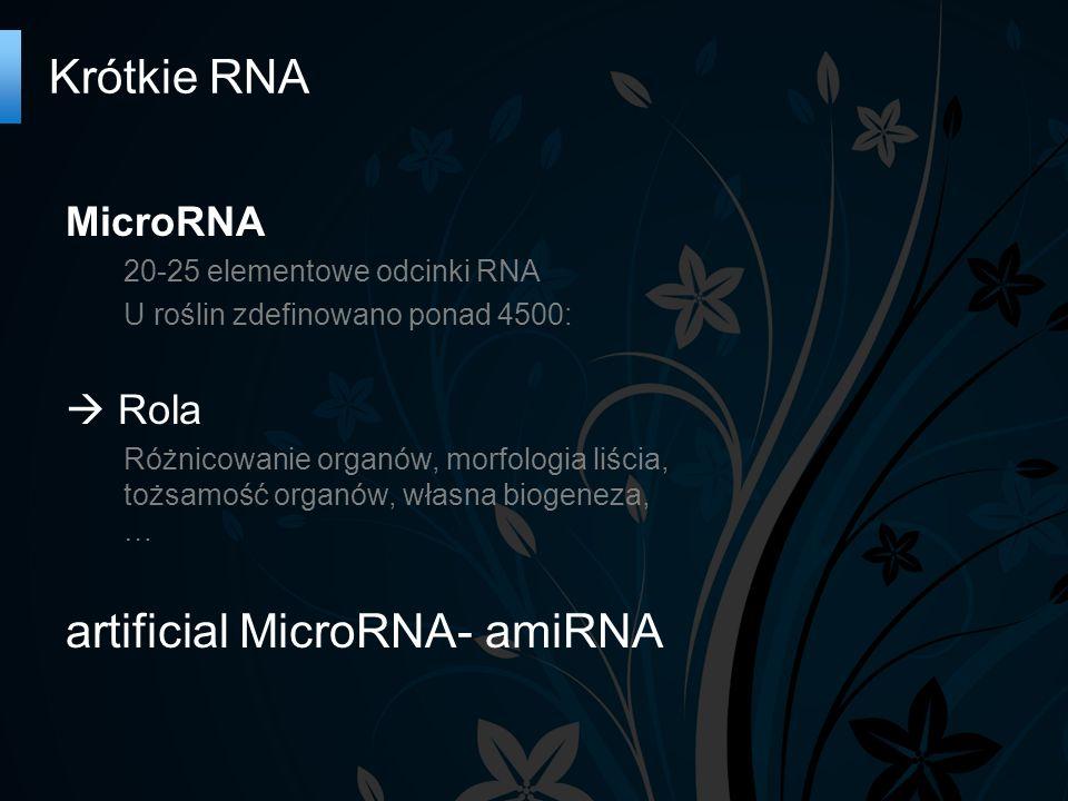 Krótkie RNA MicroRNA 20-25 elementowe odcinki RNA U roślin zdefinowano ponad 4500:  Rola Różnicowanie organów, morfologia liścia, tożsamość organów, własna biogeneza, … artificial MicroRNA- amiRNA