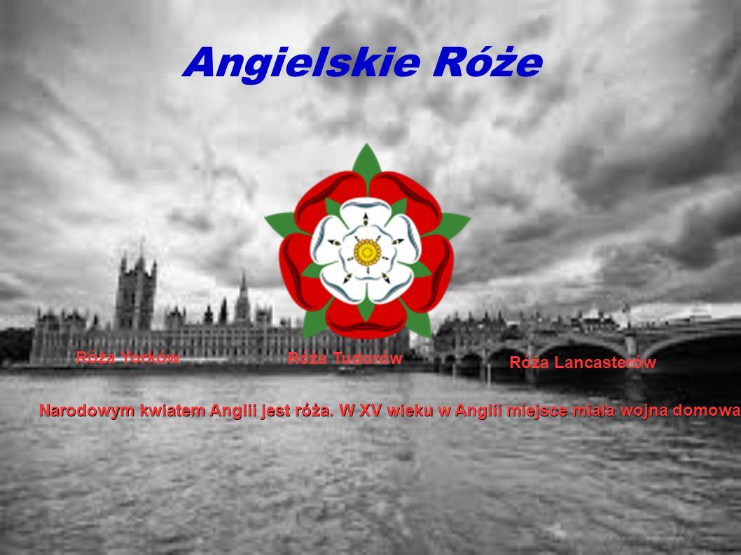 Angielskie Róże Narodowym kwiatem Anglii jest róża. W XV wieku w Anglii miejsce miała wojna domowa. Toczyła się między rodami Yorków i Lancasterów. Sy