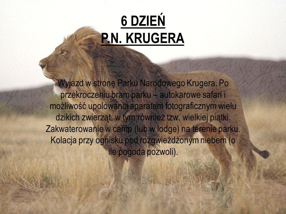 6 DZIEŃ P.N. KRUGERA Wyjazd w stronę Parku Narodowego Krugera. Po przekroczeniu bram parku – autokarowe safari i możliwość upolowania aparatem fotogra