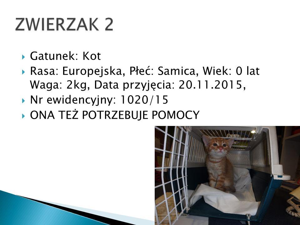 GGatunek: Kot RRasa: Europejska, Płeć: Samica, Wiek: 0 lat Waga: 2kg, Data przyjęcia: 20.11.2015, NNr ewidencyjny: 1020/15 OONA TEŻ POTRZEBUJE POMOCY