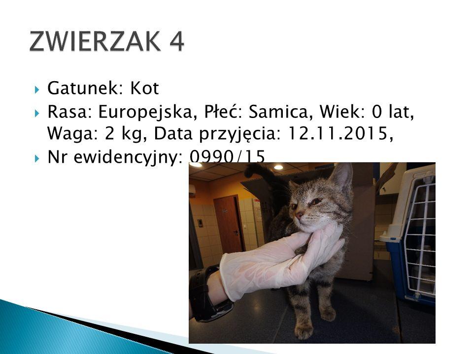 Gatunek: Kot  Rasa: Europejska, Płeć: Samica, Wiek: 0 lat, Waga: 2 kg, Data przyjęcia: 12.11.2015,  Nr ewidencyjny: 0990/15