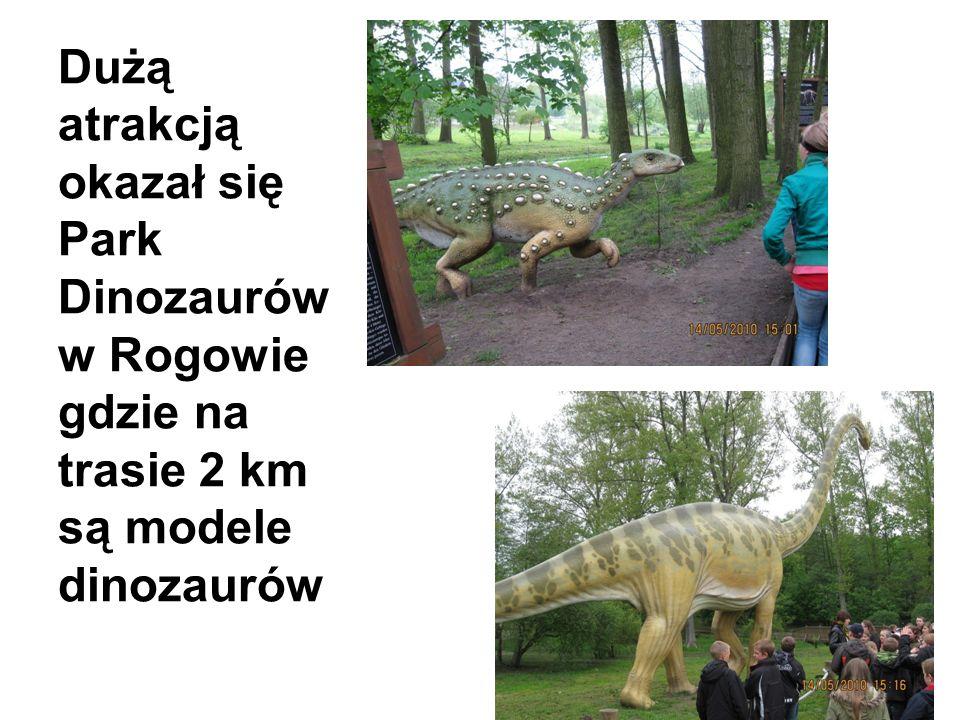Dużą atrakcją okazał się Park Dinozaurów w Rogowie gdzie na trasie 2 km są modele dinozaurów